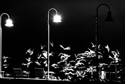 Photograph - Flock Of Birds by Celso Diniz