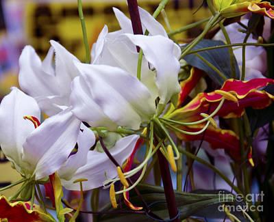 Flower Digital Art - Floral Colors by Pravine Chester