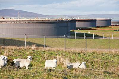 Flotta Oil Terminal Art Print by Ashley Cooper