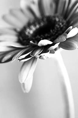 Leinwand Photograph - Flower Bw by Falko Follert