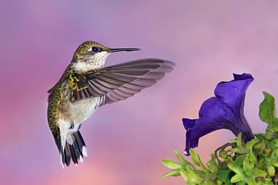 Photograph - Flower Feeder by Leda Robertson