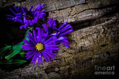 Photograph - Flower by Michael Arend