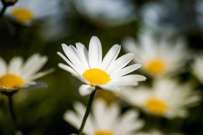 Flower Art Print by Mirra Photography