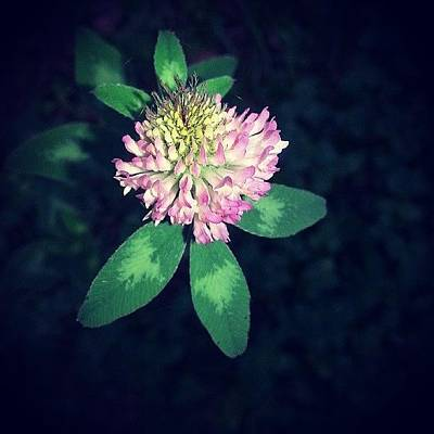 Nature_shooters Photograph - #flower #nature_shooters #naturelover by Jill Lund