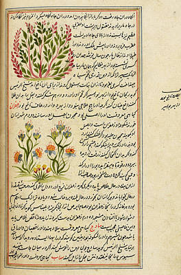 Flower Creations Photograph - Flowering Plants by British Library