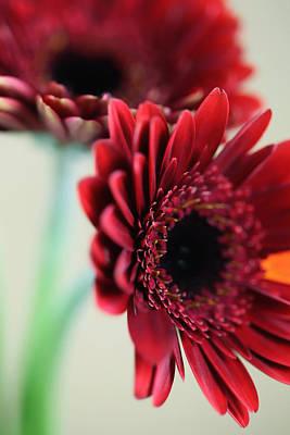 Leinwand Photograph - Flowers by Falko Follert