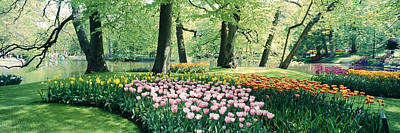 Keukenhof Gardens Photograph - Flowers In A Garden, Keukenhof Gardens by Panoramic Images
