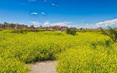 Photograph - Flowers In The Badlands by John M Bailey