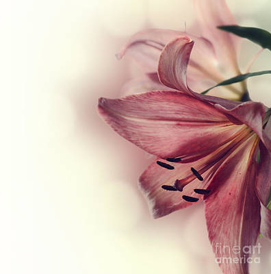 Lilies Royalty-Free and Rights-Managed Images - Flowers by Jelena Jovanovic