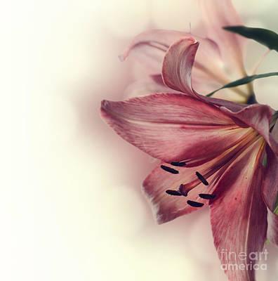 Flowers Art Print by Jelena Jovanovic