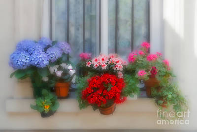 Blue Begonias Photograph - Flowers On A Windowsill In Paris by Louise Heusinkveld