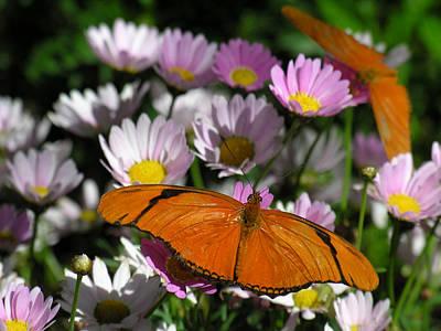 Photograph - Flowers by Robert Lozen
