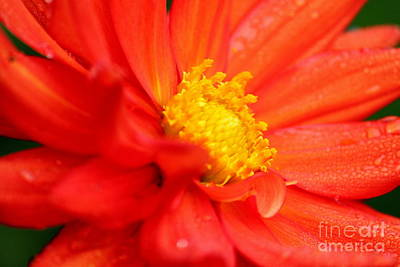 Photograph - Flowers5 by Theresa Ramos-DuVon