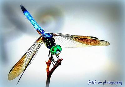 Photograph - Fly Dragon by Faith Williams