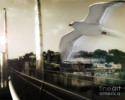 Photograph - Fly Me by Edmund Nagele