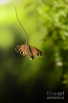 Photograph - Flying Dragon In Flight by Scott Linstead