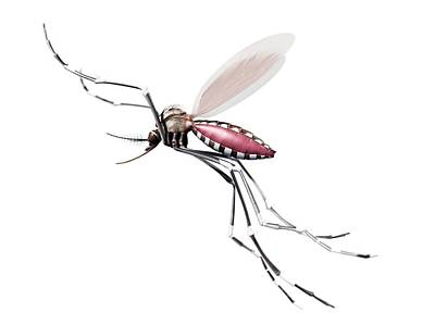 Flying Mosquito Art Print by Sciepro/science Photo Library