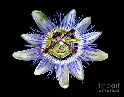 Art Print featuring the photograph Fly's Passion by Jennie Breeze