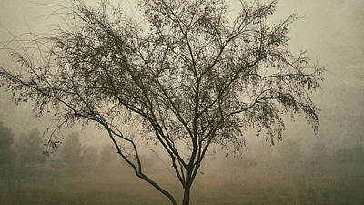 Photograph - Foggy Morning  by Saija  Lehtonen