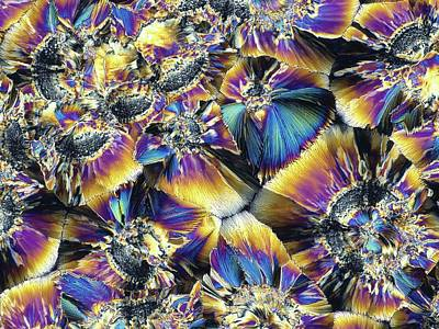 Biochemistry Photograph - Folic Acid Crystals by Alfred Pasieka