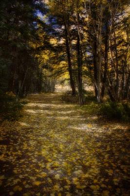 Photograph - Follow The Light by Ellen Heaverlo