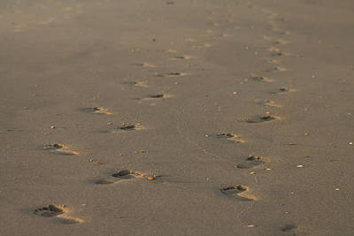 Photograph - Footprints In The Sand by Jessica Brown
