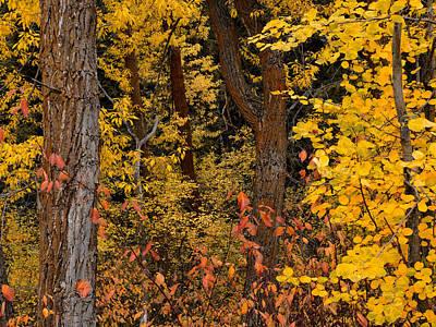 Autumn Photograph - Forest Color by Leland D Howard