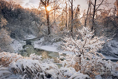 Landscape Natural Photograph - Forest Creek After Winter Storm by Elena Elisseeva