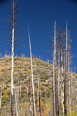 Fir Trees Photograph - Forest Destroyed By Wild Fires by Ashley Cooper