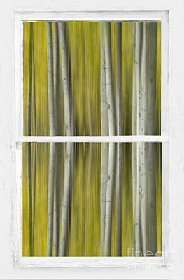 Photograph - Forest Dream Through White Rustic Distressed Window by James BO Insogna