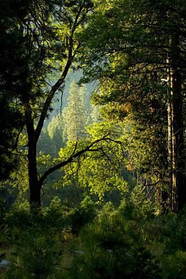 Andrew Wyeth Photograph - Forest Fantasy by Joe Darin