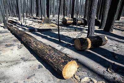 Devastation Photograph - Forest Fire by Ashley Cooper