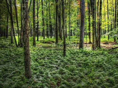 Photograph - Forest Floor by David Armstrong