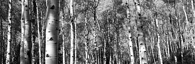 White River Scene Photograph - Forest, Grand Teton National Park by Panoramic Images