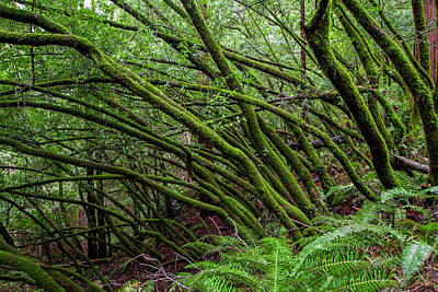 Mill Valley Photograph - Forest Scene In Muir Woods State Park by James White
