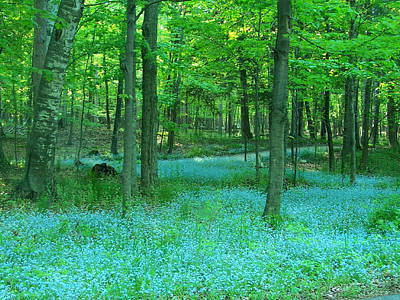 Forget-me-nots In Peninsula State Park Art Print by David T Wilkinson