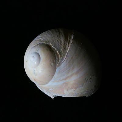 Photograph - Fossil Shell by Patricia Januszkiewicz