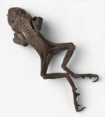 Frog Photograph - Fossilised Frog by Dorling Kindersley/uig