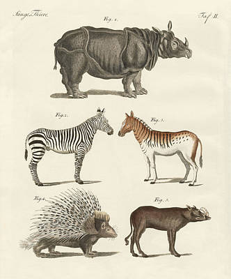 Rhinoceros Drawing - Four-footed Animals by Splendid Art Prints