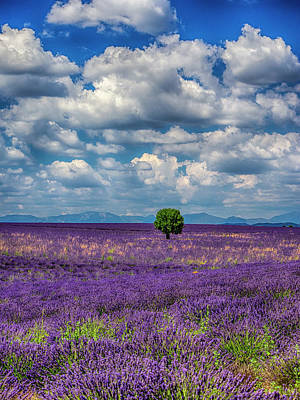 France, Provence, Valensole, Lone Tree Art Print by Terry Eggers
