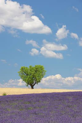 France, View Of Lavender Field With Tree Art Print by Westend61