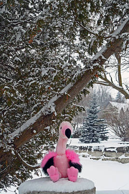 Photograph - Frank The Flamingo by Cyryn Fyrcyd