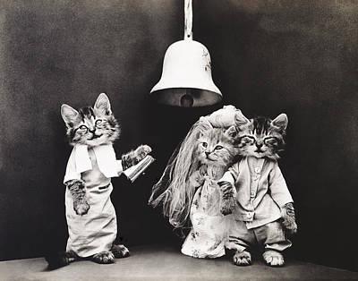 Photograph - Frees Kittens, C1914 by Granger
