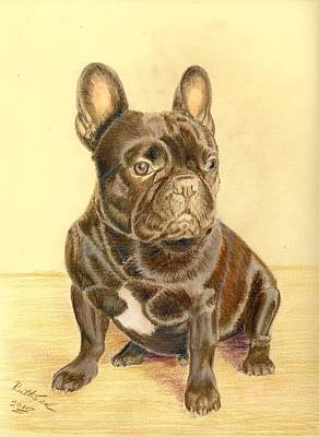 Drawing - French Bulldog by Ruth Seal