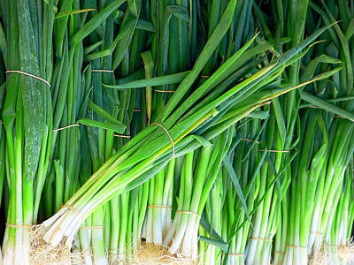 Photograph - Fresh Green Onions by Jeff Lowe