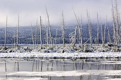 Fresh Snowfall And Bare Trees Art Print by Ken Gillespie