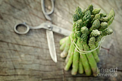 Freshly Harvested Asparagus Art Print by Mythja  Photography