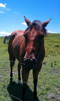 Photograph - Friendly Stallion by Kenny Glover