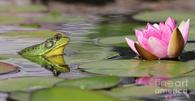 Wild And Wacky Portraits Rights Managed Images - Frog and Water Lily 9123 Royalty-Free Image by Jack Schultz