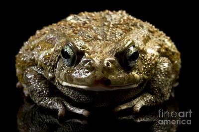 Art Print featuring the photograph Frog by Gunnar Orn Arnason